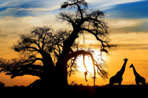 VIAGGIO FRA UTOPIA E CONCRETEZZA – Il sogno di abbattere la povertà in Africa
