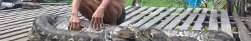 APO KAYAN, nel cuore del Kalimantan – Natura e storia – 1P