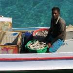 141) Atauro - freshly caught fish