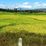 91) the arid landscope alternates with the colors of wheat and rice fields